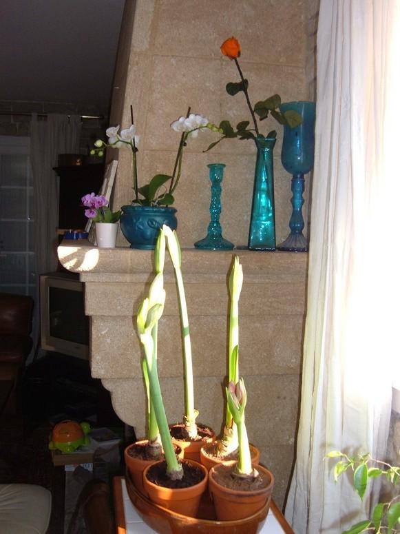 mon petit jardin d 39 int rieur. Black Bedroom Furniture Sets. Home Design Ideas