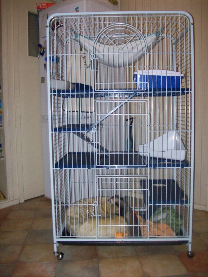 Cage pour furet vos avis 1 forum cheval for Accessoire furet fait maison