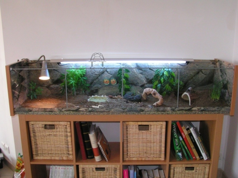 exemples de terrariums vitrine ik a. Black Bedroom Furniture Sets. Home Design Ideas