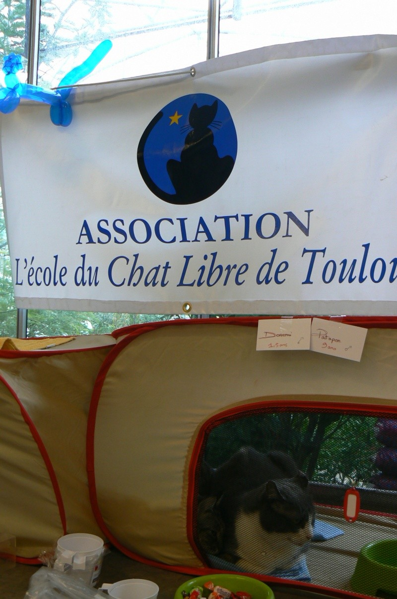 Demande de news expo espaces verts du languedoc for Espaces verts du languedoc