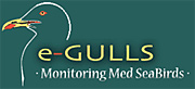 e-gull10.jpg