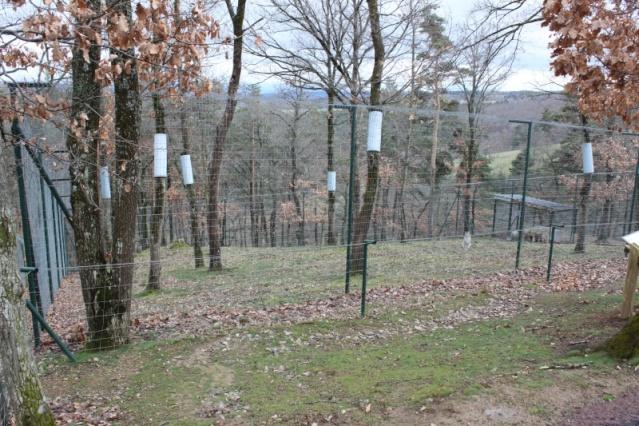 Visite au parc animalier d 39 auvergne for 78 parc animalier