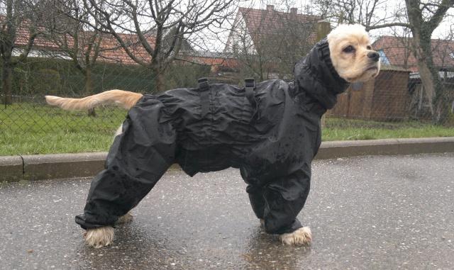 Patron manteau pour jack russel