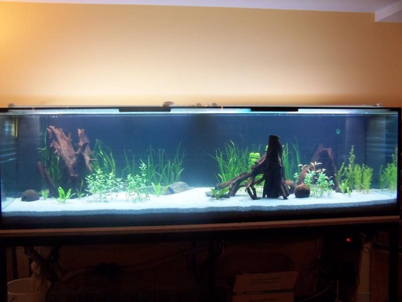 sable blanc pour aquarium. Black Bedroom Furniture Sets. Home Design Ideas