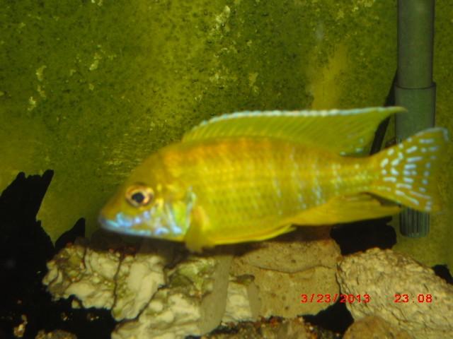 Aqua Fish Forum