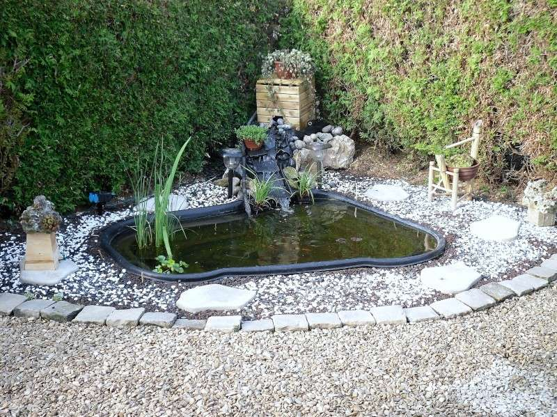 Forum aquajardin bassin koi jardin aquatique mare for Creer bassin poisson