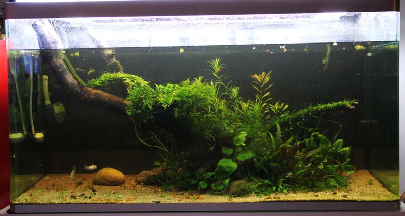 Mur v g tal avec aquarium de 320l paludarium page 3 for Dessinateur paysagiste