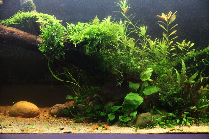 Mur v g tal avec aquarium de 320l paludarium page 4 for Dessinateur paysagiste