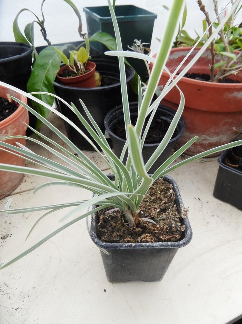 Plante sauvage for Plante 60 80