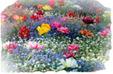 """<span style=""""color: #730CC7; font-size: 14px; font-family: verdana"""">VI PARLO DI ME (le storie dei fiori del nostro giardino) </span>"""