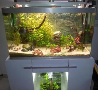 Mon premier aquarium un osaka 320 page 3 for Aquarium osaka 260