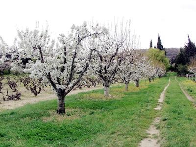 Traitement des arbres fruitiers - Traitement arbres fruitiers ...