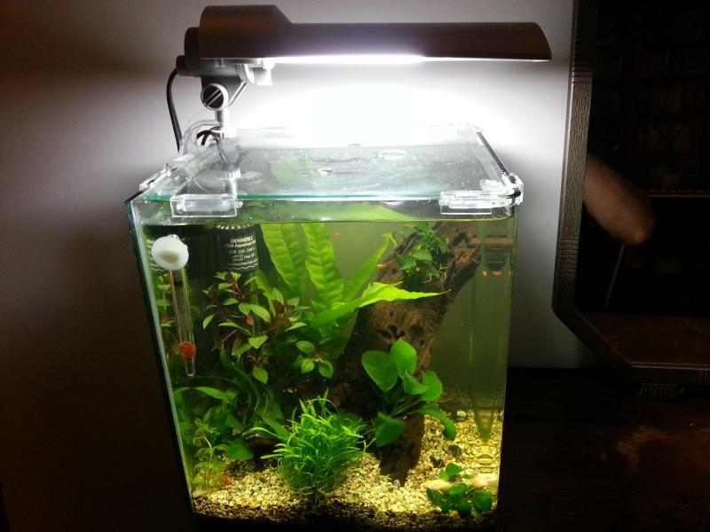 Mon 1 er aquarium, celui qui m\'a donné le virus... 20l Denne